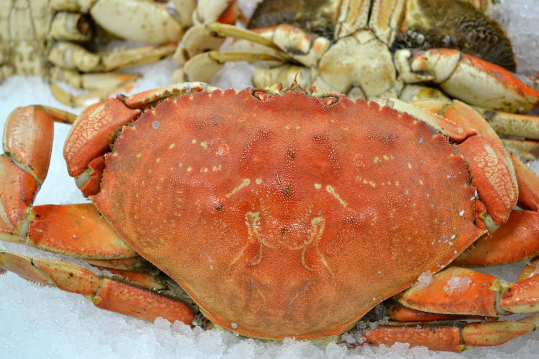FRESH COOKED B.F.C.s (Big Fat dungeness Crab) - Gemini ...